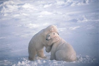 butmostofalliwishyoulots_of_bear_hugs